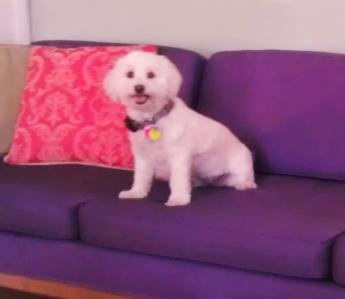 Purple sofa - Copy